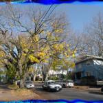 Portland Condos eastside